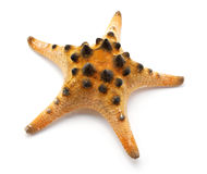Spotty Star Stock Photos