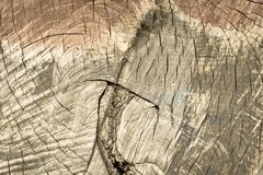 Spotty wooden texture with cracks of old color sepia Royalty Free Stock Image