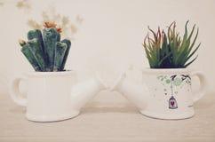 Spotykać berween dwa rośliny Obrazy Stock