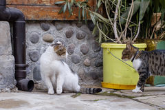 Spotyka koty Fotografia Royalty Free