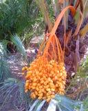 spotyka się z drzewka palmowego Obraz Stock