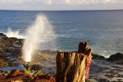 Spouting horn- Kauai Arkivfoton