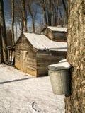 Сезон засахаривать клена - дом и ведерка сахара Стоковая Фотография RF