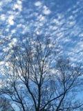 Spräckliga moln mot Carolina den blåa himlen Arkivfoto