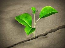 Sprössling, der auf der Wüste wächst Abbildung 3D stock abbildung