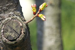 Sprössling, der vom Baum wächst Lizenzfreie Stockbilder