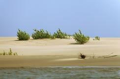 Sprössling im Sand Stockfotos