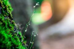 Sprössling und grüner Mooshintergrund, Baum mit grünem Moos Eine Abbildung einer Batikauslegung in zwei Farbtönen Braun oder des  Stockfotos
