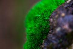 Sprössling und grüner Mooshintergrund, Baum mit grünem Moos Eine Abbildung einer Batikauslegung in zwei Farbtönen Braun oder des  Lizenzfreie Stockfotos