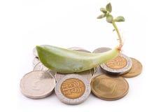 Sprössling von Succulent über Münzen Stockfoto