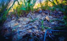 Sprösslinge auf dem Rasen Stockbild