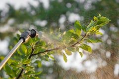 Sprühbäume mit Schädlingsbekämpfungsmitteln Lizenzfreie Stockbilder