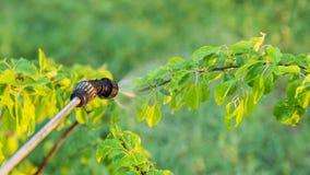 Sprühbäume mit Schädlingsbekämpfungsmitteln Lizenzfreie Stockfotos