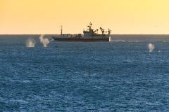 Sprühen Sie von den Walen, die um Fischerboot in Island schwimmen stockbilder