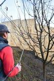 Sprühobstbäume früh im sprigtime Lizenzfreies Stockfoto