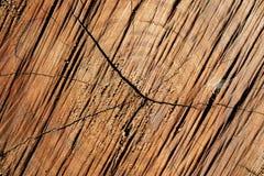 Sprünge auf Baum-Stumpf Stockfoto