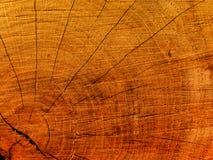 Sprünge auf einem Schnitt eines Baums eine Eiche lizenzfreies stockfoto