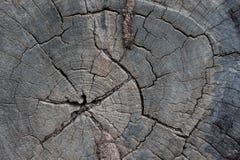 Sprünge im alten Holz Lizenzfreie Stockbilder