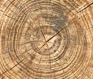 Sprünge und Jahresringe auf dem Sägeschnitt des alten Baumhintergrundes Stockfotos