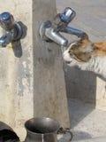 Spragniony kot zdjęcie royalty free