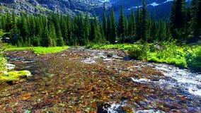 Sprague Creek Glacier National Park stock video