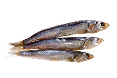 Sprat Stock Photography