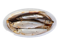 Sprat Stock Photo
