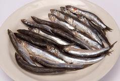 Sprat Royalty Free Stock Images