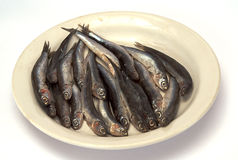 Sprat Stock Photos