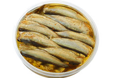 Sprat in the bank Royalty Free Stock Images
