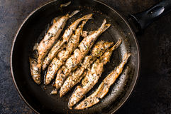 Sprat, capelin fried in a pan Royalty Free Stock Photos