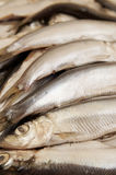 Sprat fish Royalty Free Stock Photos