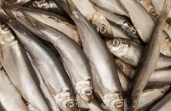 Sprat fish Stock Images