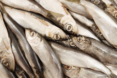 Sprat fish Royalty Free Stock Images