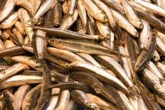 Sprat fish on ice exposition sea market. Seafood. Sprat fish sea market. Seafood stock image