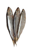 Sprat fish Royalty Free Stock Photography
