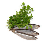 Sprat fish Stock Image