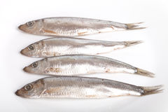 Sprat fish  on white background Stock Photos