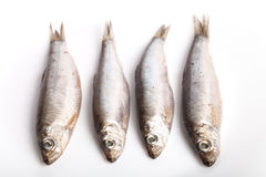 Sprat fish  on white background Stock Images