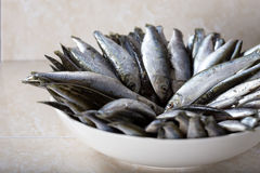 Sprat in the Royalty Free Stock Photos