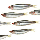 Sprat Group Stock Photos