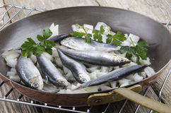Sprat with onions in a pan Royalty Free Stock Image