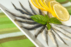 Sprat salad Royalty Free Stock Photography