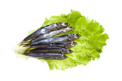Sprat on salad Royalty Free Stock Images