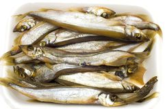 Sprat on white Stock Photos