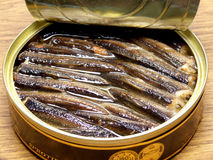 Sprats; Stock Photo