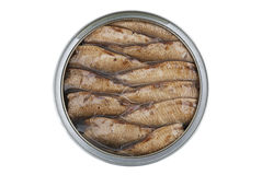 Sprats in the bank. On a white background Stock Photo