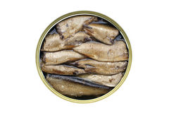 Sprats in can Royalty Free Stock Photos