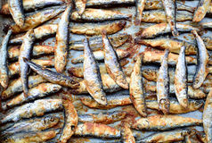Sprats fish. Close up of grilled sprats fish Stock Photography