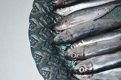Sprats fish on a plate. Plate with salted Baltic sprat Stock Image